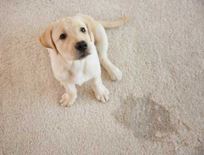 Pet Stain and Odor Removal nav